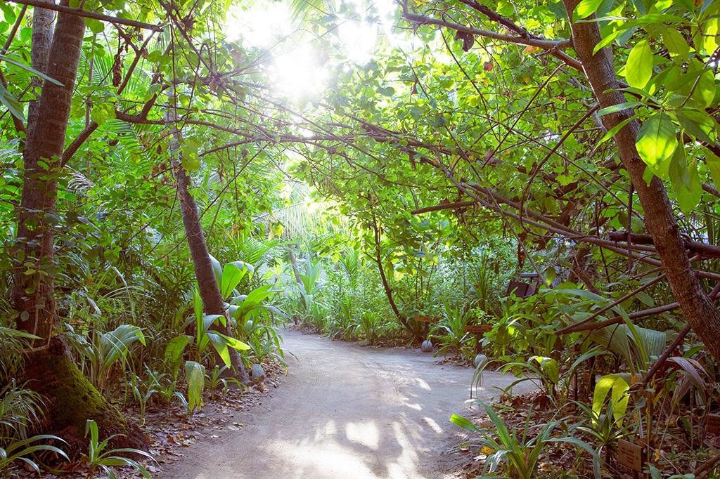 Vegetación tropical en Coco Bodu