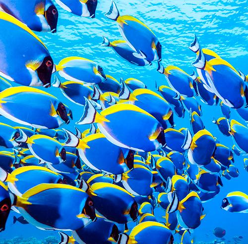 Viajes de buceo a Maldivas